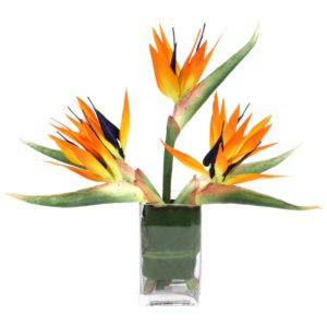 Bird of Paradise at Pike Place Flowers