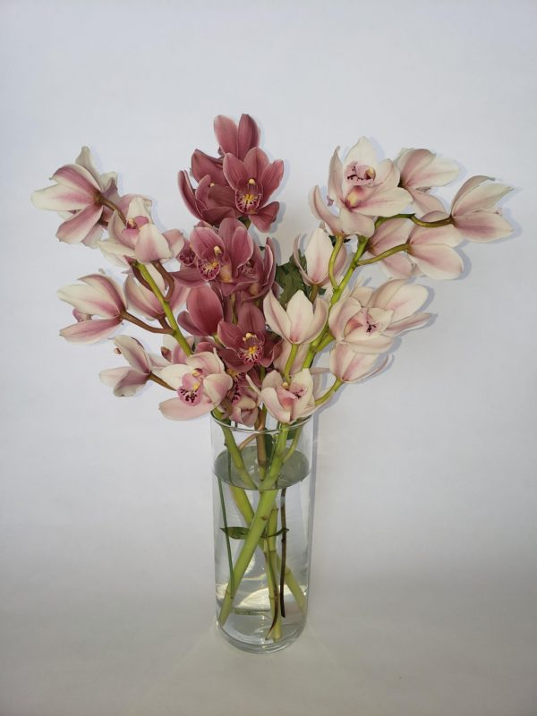 cymbidium3stems