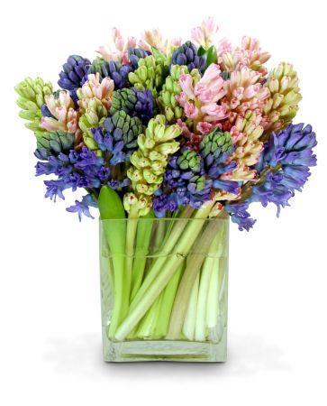 30-Hyacinth