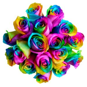 seattle-rainbow-roses
